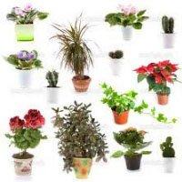Разнообразие видов комнатных цветов