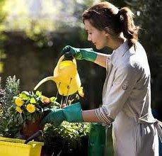 Растения у Вас в доме
