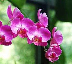 виды комнатных растений орхидея