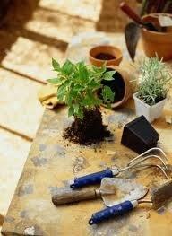 пересадка комнатных растений в октябре