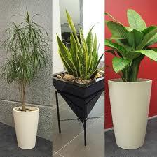 расположение комнатных растений