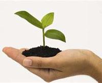 пересадка комнатных растений осенью