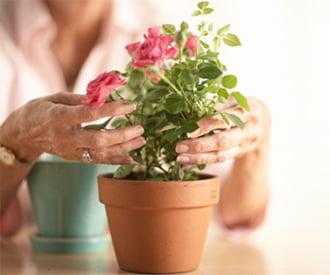 Пересаживать комнатные растения лучше весной