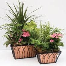 Сад комнатных растений