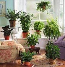 Декоративные растения в комнате