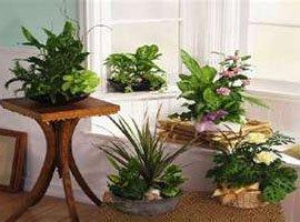 Способы расположения комнатных растений