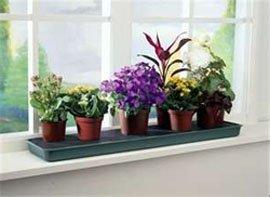 Размещение комнатных цветов на подоконнике