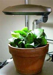 светодиодная фитолампа для растений e27 3 plt 3w 220v spot