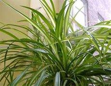 Домашние растения для кухни