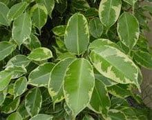 Популярные домашние растения