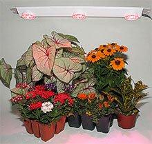 фитолампа для растений купить в ярославле