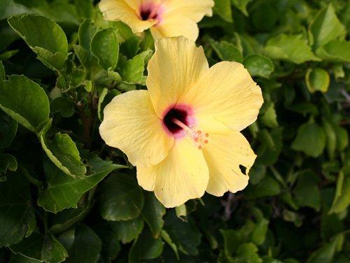 Комнатные растения в природе