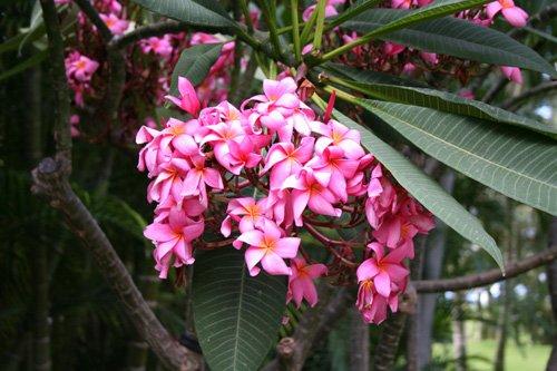 Домашние растения в естественных условиях