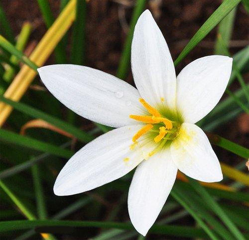 Астильба  простое выращивание цветка из семян